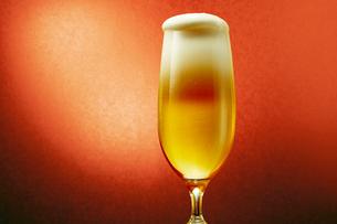 赤色背景のグラスのビールの写真素材 [FYI03102353]