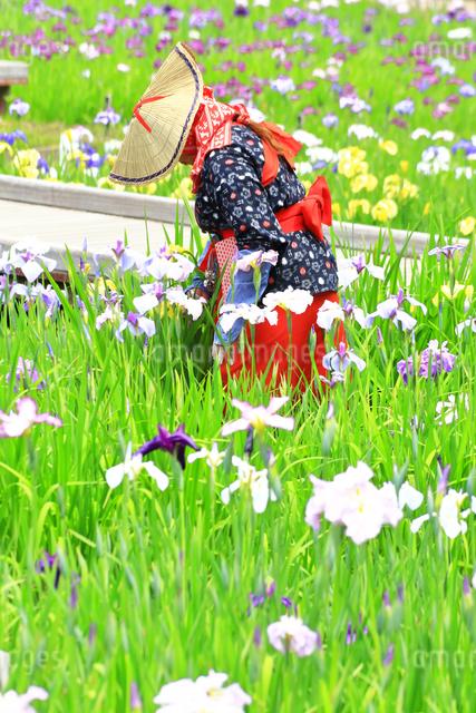 横須賀しょうぶ園の写真素材 [FYI03104665]