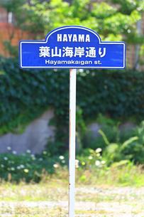 神奈川県 葉山海岸通りの写真素材 [FYI03104704]