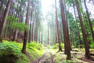 丹沢の原生林の写真素材 [FYI03104755]