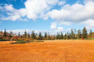 秋の神仙沼湿原の写真素材 [FYI03104983]