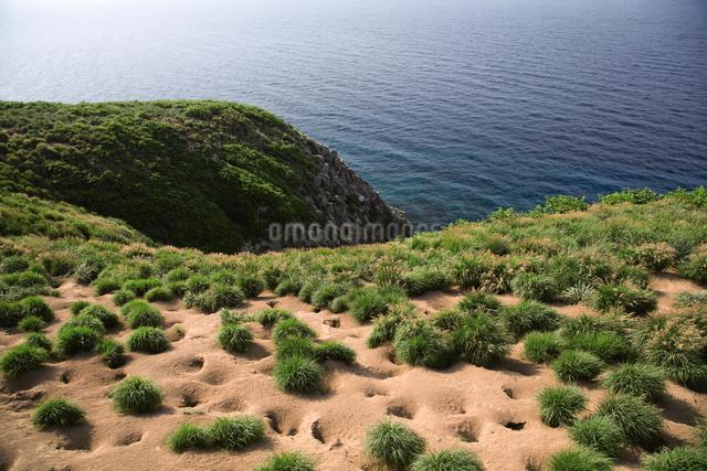 天売島のウトウの巣穴の写真素材 [FYI03105801]