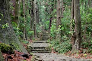 熊野古道の大門坂の写真素材 [FYI03106260]