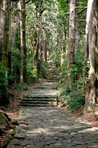 熊野古道の大門坂の写真素材 [FYI03106263]