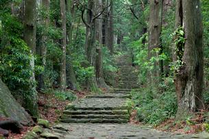 熊野古道の大門坂の写真素材 [FYI03106264]