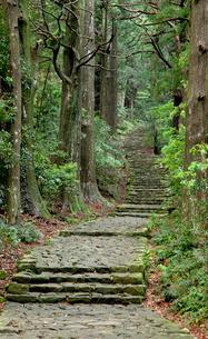 熊野古道の大門坂の写真素材 [FYI03106291]