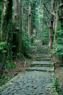 熊野古道の大門坂の写真素材 [FYI03106295]