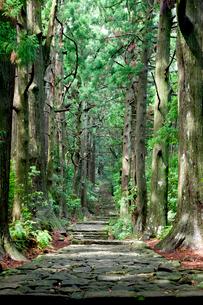 熊野古道の大門坂の写真素材 [FYI03106296]