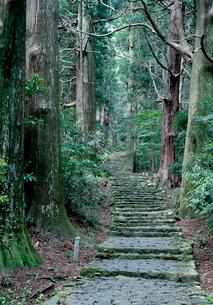 熊野古道の大門坂の写真素材 [FYI03106300]
