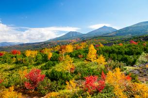 望岳台より望む十勝岳の写真素材 [FYI03106617]