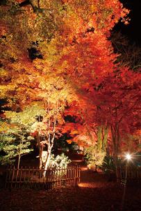 錦秋の玄宮園ライトアップの写真素材 [FYI03106934]