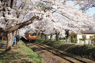 津軽鉄道・走れメロス号の写真素材 [FYI03107435]