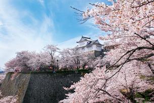 鶴山公園で催される津山さくらまつりの写真素材 [FYI03107503]