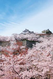 鶴山公園で催される津山さくらまつりの写真素材 [FYI03107504]