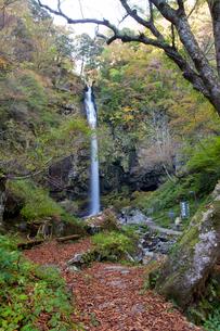 秋の阿弥陀ヶ滝の写真素材 [FYI03107666]