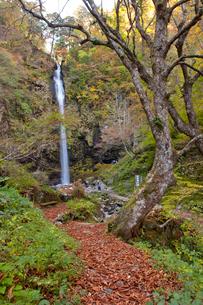 秋の阿弥陀ヶ滝の写真素材 [FYI03107667]