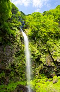 前谷川の上流に位置する阿弥陀ケ滝の写真素材 [FYI03108175]