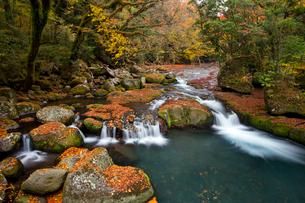紅葉映える菊池川の写真素材 [FYI03108429]