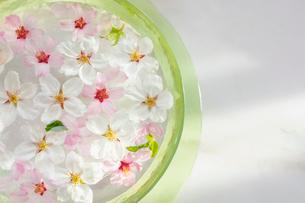 ガラス器と桜の花の写真素材 [FYI03114748]