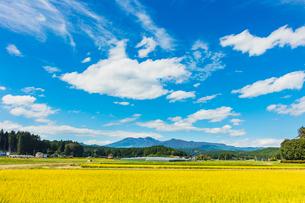 稲田と高原山の写真素材 [FYI03114749]