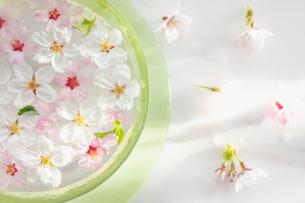 ガラス器と桜の花の写真素材 [FYI03114765]