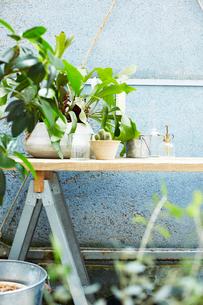植物が沢山あるサンルームの写真素材 [FYI03114824]