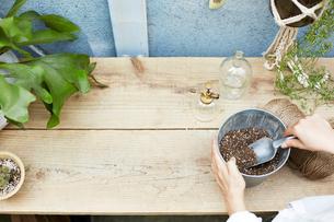 作業台の上でバケツに入った土を掬う女性の手元の写真素材 [FYI03114840]