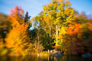 夕日に輝く紅葉に囲まれたセントラルパークのザ レイク。の写真素材 [FYI03115084]