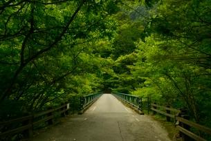 寸又峡の天龍橋の写真素材 [FYI03115173]