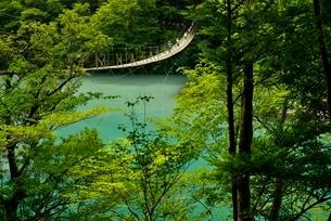 寸又峡温の夢の吊橋の写真素材 [FYI03115180]