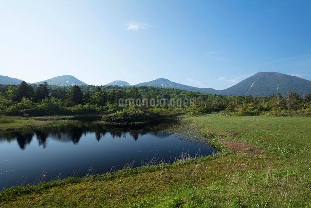 新緑の水連沼の写真素材 [FYI03115221]