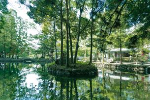 日本名水百選 栃木県天然記念物 出流原弁天池湧水の新緑の朝の写真素材 [FYI03115282]