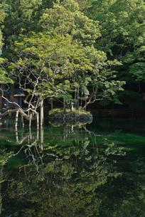 日本名水百選 栃木県天然記念物 出流原弁天池湧水の新緑の朝の写真素材 [FYI03115286]