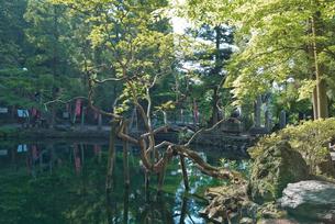 日本名水百選 栃木県天然記念物 出流原弁天池湧水の新緑の朝の写真素材 [FYI03115304]