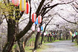 神奈川県 弘法山の桜の写真素材 [FYI03115573]