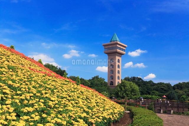 花壇のある相模原麻溝公園の写真素材 [FYI03115579]