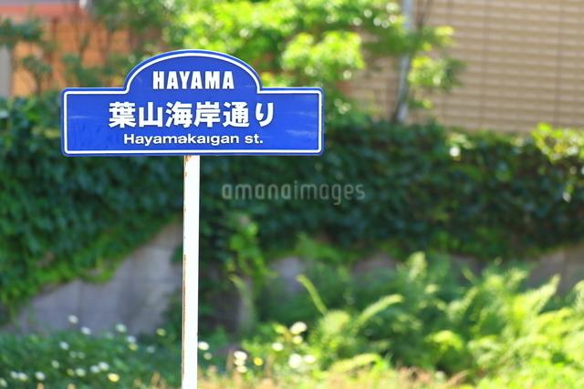 神奈川県 葉山海岸通りの写真素材 [FYI03115603]