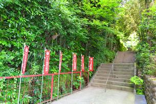 神奈川県 白笹稲荷神社の写真素材 [FYI03115619]