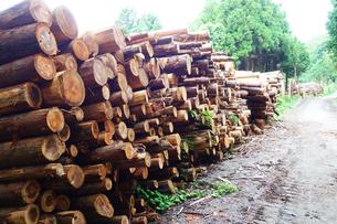 伐採された樹木の写真素材 [FYI03115622]