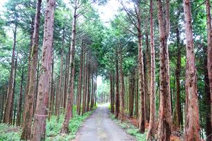 丹沢の原生林の写真素材 [FYI03115629]
