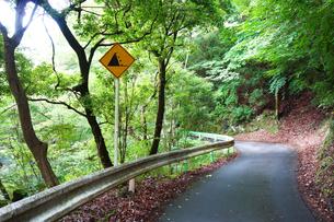 落石注意の道路標識の写真素材 [FYI03115631]