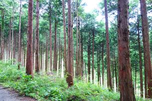 丹沢の原生林の写真素材 [FYI03115633]