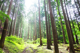 丹沢の原生林の写真素材 [FYI03115640]