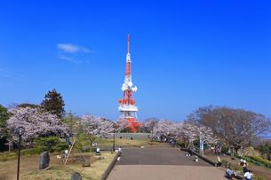 神奈川県 湘南平の桜の写真素材 [FYI03115672]
