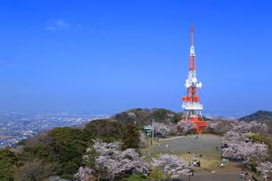 神奈川県 湘南平の桜の写真素材 [FYI03115678]