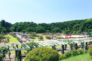 生田緑地 ばら苑の写真素材 [FYI03115692]