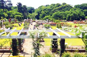 生田緑地 ばら苑の写真素材 [FYI03115700]