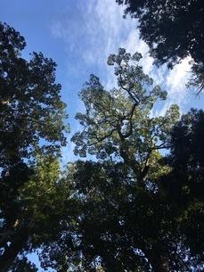 木漏れ日の写真素材 [FYI03115760]