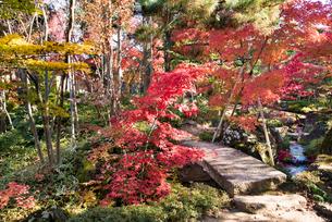 洗心庵の秋の写真素材 [FYI03115778]