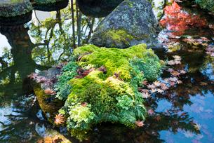 洗心庵の秋の写真素材 [FYI03115785]